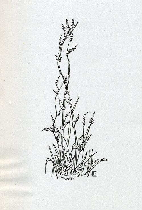 "dessin : ""mauvaises"" herbes"