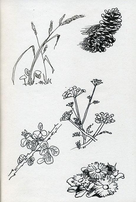 étude de végétaux