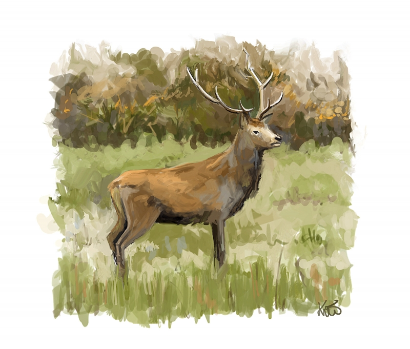 Cerf, speed painting