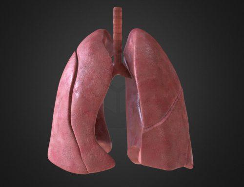 Images médicales : modélisation de poumons humain