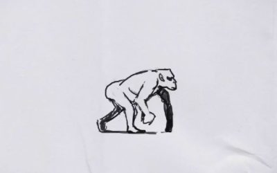 Animation de marche, primate
