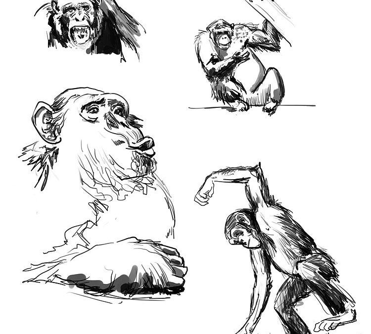 Étude de primates
