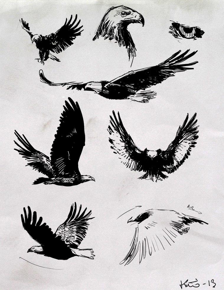 Croquis d 39 aigle royal et pygargue t te blanche kiwimage - Dessin d aigle royal ...